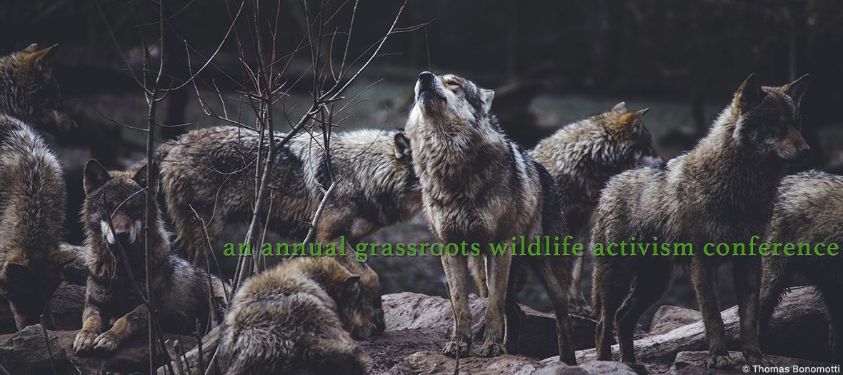 Speak for Wolves